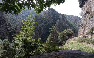 Bonjour à tous, la réserve de Nyer : gorges sauvages minérales, forêts, faunes, flores, la réserve naturelle de Nyer est un endroit d'une richesse extraordinaire. Le vieux projet de route pour rejoindre Mantet démarré avant la première guerre mondiale, nous amène dans le minéral chaotique où la ribera Mentet a creusé la roche durant des millénaires. La piste s'arrête au détour d'un petit tunnel et nous permet de faire la visite dans l'autre sens et de revivre une expérience minérale… Bises Thierry