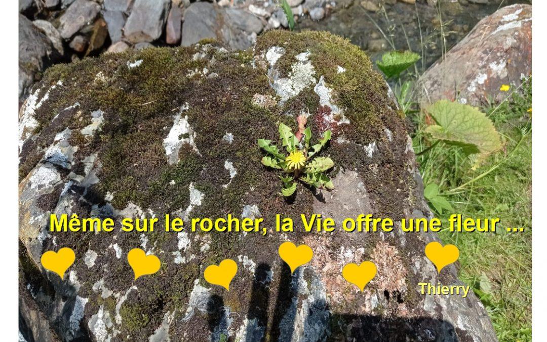 Même sur le rocher, la Vie offre une fleur… Thierry